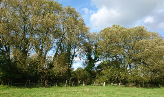 Hedgerow Surveys
