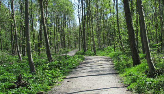 Woodland Management Plans